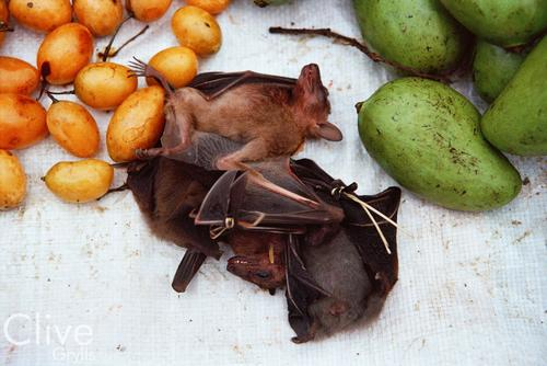 Bats and vegetables for sale at the morning market, Luang Prabang.