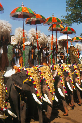 Decorated elephants perform with their mahouts at the annual Pooram festival. Thrissur, Kerala.