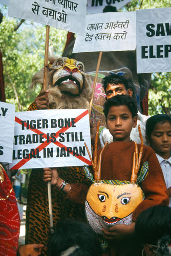Young children performing a street theatre in protest against Japanese imports of ivory and tiger parts.