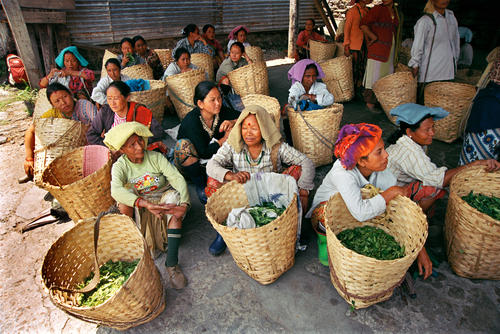 Tea pluckers waiting to have their baskets of tea weighed at the Makaibari Tea Estate, Kurseong, West Bengal.