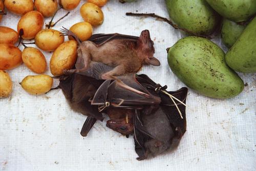 Bats and vegetables for sale at the morning market, Luang Prabang, Laos.