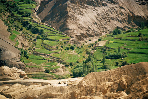 An oasis of green outside Lamayuru village, Ladakh.