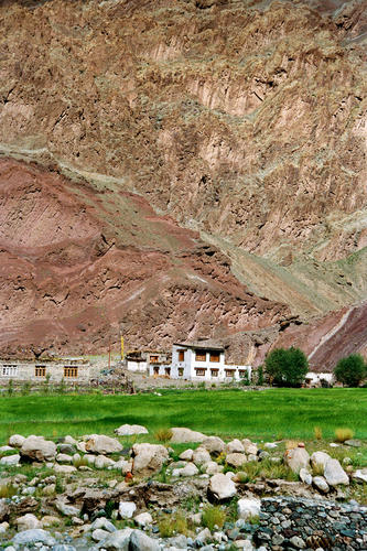 An oasis of green outside a house close to the village of Gya, Ladakh.