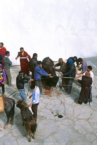 Ceremonial offering being performed at the Korzok Gustor festival, Ladakh.