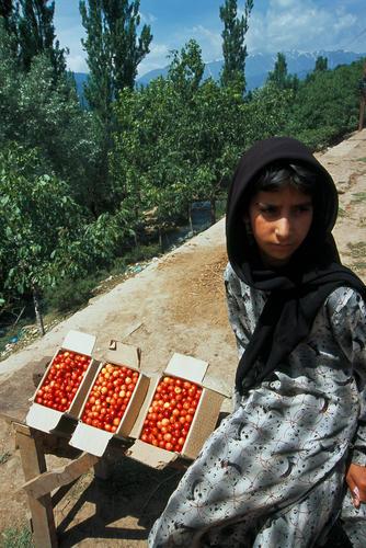 Cherry seller on the Srinagar-Pahalgam highway.