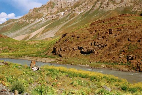 A typical alpine meadow in Kashmir.