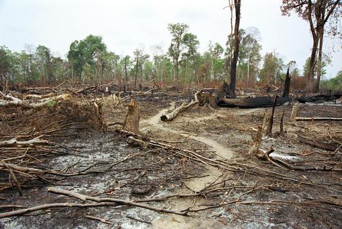 Illegal logging in Mondulkiri Province, Cambodia.