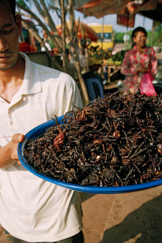 Spiders for sale at Skuon, Cheung Prey, Kampong Cham Province, Cambodia.