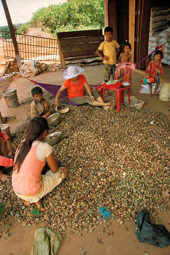 Snails for sale at Skuon, Cheung Prey, Kampong Cham Province, Cambodia.