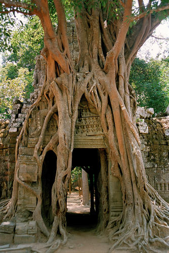 "Preah Khan (""Royal Sword"") is a temple at Angkor, Cambodia, built in the 12th century. It has been left largely unrestored, with numerous trees growing among the ruins."