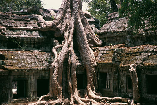 Ta Prohm was built in the late 12th century and is in much the same condition in which it was found. UNESCO inscribed Ta Prohm on the World Heritage List in 1992.