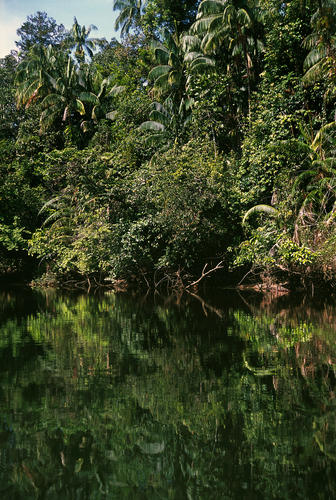 Dense jungle along the banks of the Phipot River close to the village of Chi Phat, Koh Kong Province, Cambodia.