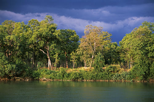 Mekong dry forest ecosystem along the Srepok River in the Mondulkiri Protected Forest, Mondulkiri Province, Cambodia.