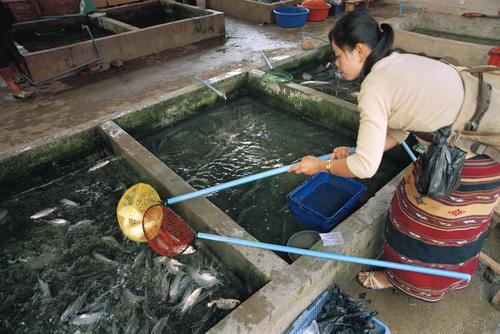 Fish market at Luang Namtha, Luang Namtha Province.