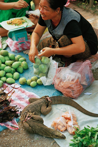 Woman with live monitor lizard for sale at the morning market, Luang Prabang.