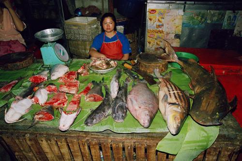Fish for sale at the morning market, Luang Prabang.