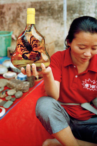 Traditional lao-Lau whisky fermented with cobras and scorpions on sale in Luang Prabang.