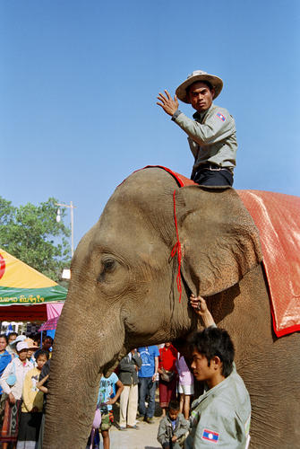 The winner of the BEST BULL category at the annual Elephant Festival held in Sayaboury Province.