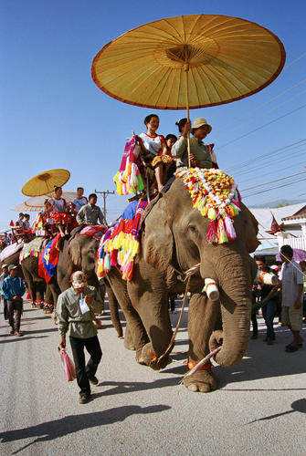 Elephants performing at the main judging procession at the annual Elephant Festival held in Sayaboury Province