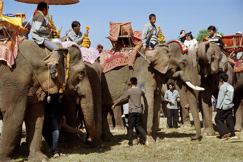 Elephants lining up to be blessed at the annual Elephant Festival held in Sayaboury Province.