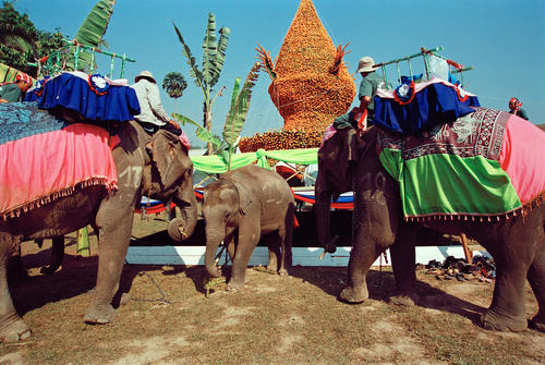 Young elephant being blessed at the annual Elephant Festival held in Sayaboury Province.