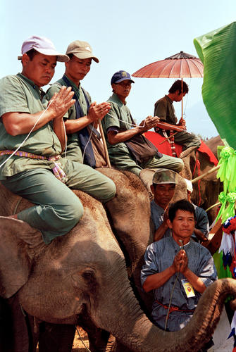 Mahouts praying for the souls of their elephants at the annual Elephant Festival held in Sayaboury Province.