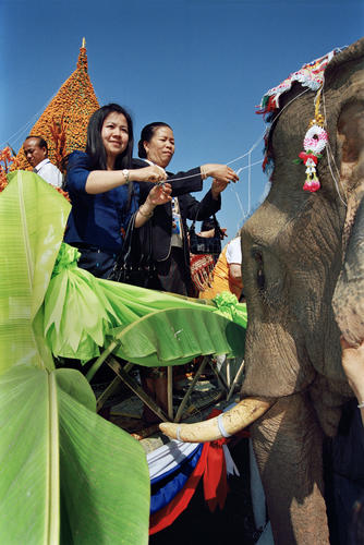 Devotees practicing the 'Souk Khouan' ritual (calling back the souls). Once the soul has returned to the elephant white threads are attached to its tusks.