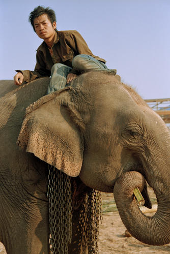 Mahout with his elephant at the annual Elephant Festival, Sayaboury Province, Laos.