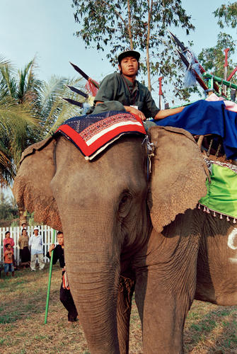 Young mahout with traditional at the annual Elephant Festival, Sayaboury Province, Laos.