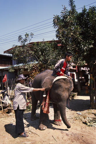 Young boy and elephant at the annual Elephant Festival, Sayaboury Province, Laos.