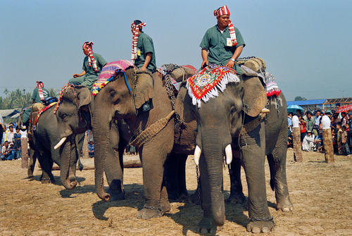 Mahouts and elephants at the annual Elephant Festival, Sayaboury Province, Laos.