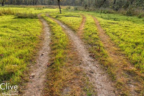 Grasslands in the Chitwan National Park