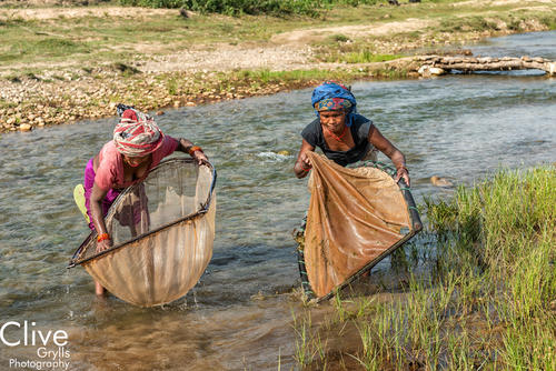 Tharu women fishing with traditional nets outside of the Bardia National Park