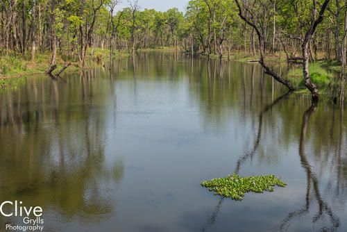 Riverine forest in the Chitwan National Park
