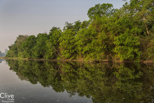 Riverine forest in the Bardia National Park