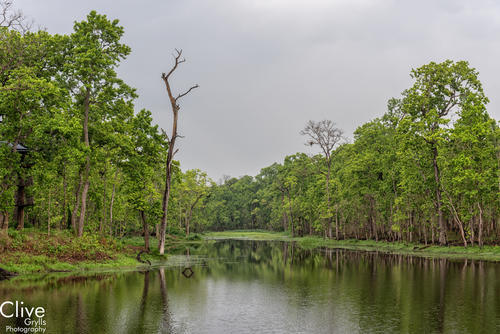Riverine forest in the '20,000 Lakes' area outside of Chitwan National Park