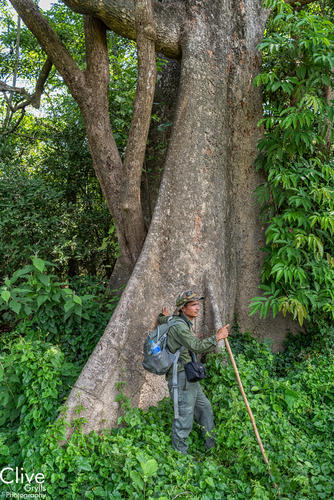 Guide posing alongside a giant tree in the Chitwan National Park