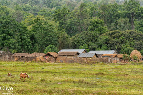 Tharu village in the Madi region of Chitwan National Park