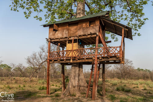 Tree house in a community forest outside of the Bardia National Park