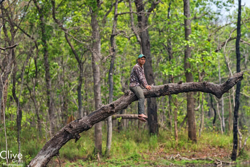 Guide sitting on the bough of a tree in the Chitwan National Park