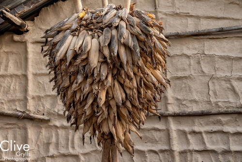 Dried corn hung in a Tharu village located outside Bardia National Park