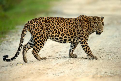 Nagarhole Tiger Reserve