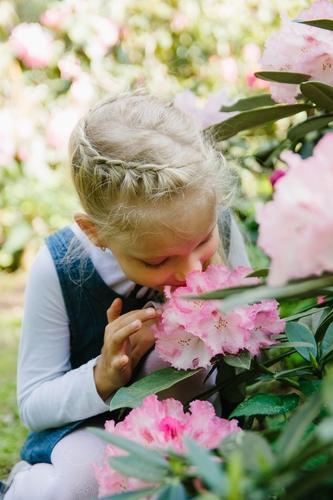 Bērna fotosesija Babītes Rododendru parkā meitene pasmaržo ziedus