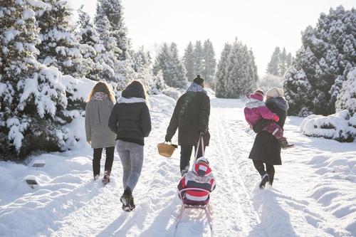 Ziemas fotosesija ģimenei velkot ragaviņas egļu mežā spīdot saulei sniegu kupenās