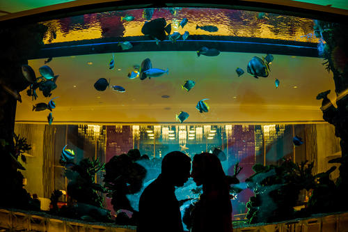 finding nemo Fish aquarium couple silhouette