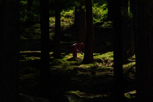 Woman Gathering in the Forest