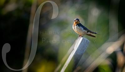 Birds - Photgraphy