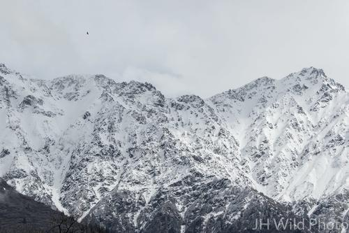 Yukon Mountainscape with eagle overhead