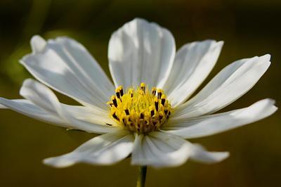 Final Flower of Summer