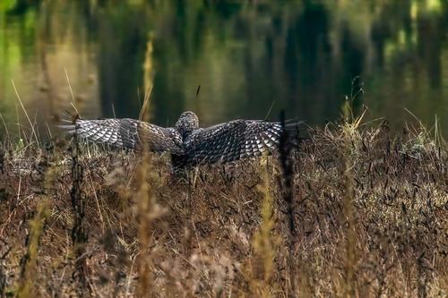 Audubon Promo Shoot
